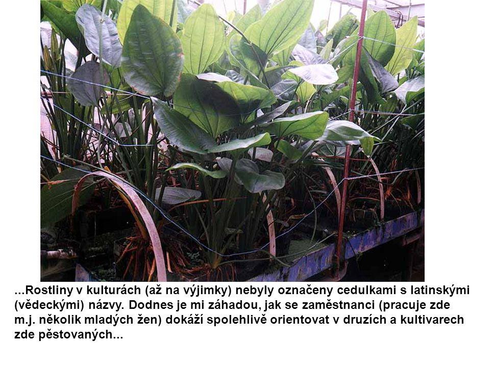 ...Rostliny v kulturách (až na výjimky) nebyly označeny cedulkami s latinskými (vědeckými) názvy. Dodnes je mi záhadou, jak se zaměstnanci (pracuje zd