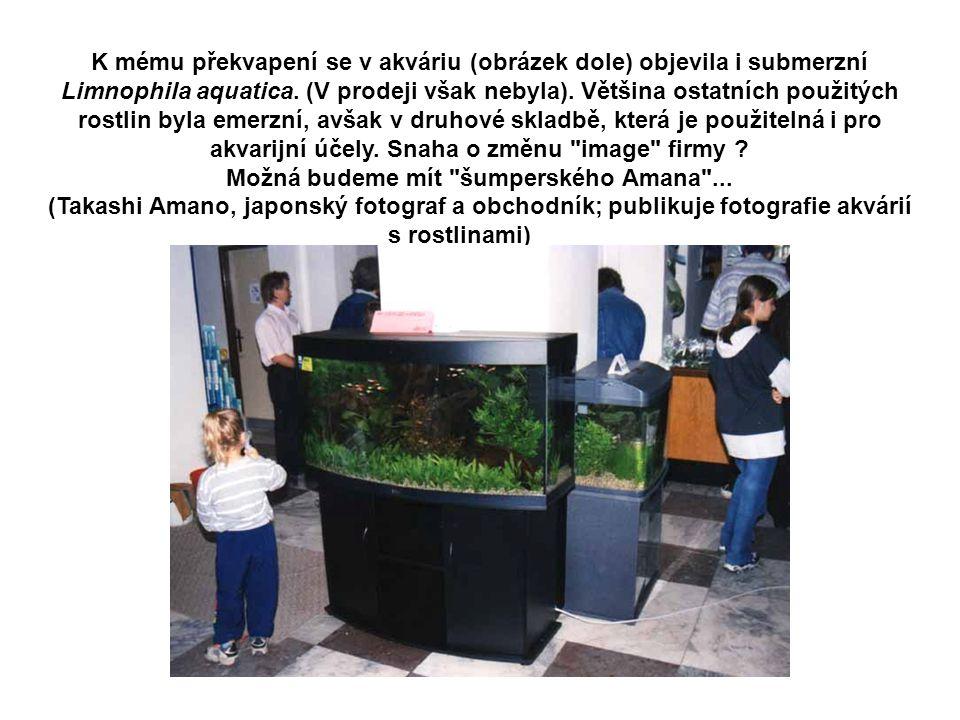 K mému překvapení se v akváriu (obrázek dole) objevila i submerzní Limnophila aquatica. (V prodeji však nebyla). Většina ostatních použitých rostlin b