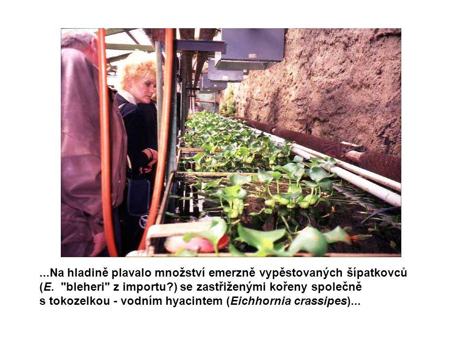 ...Zjevně také chybí snaha přizpůsobit sortiment pěstovaných rostlin potřebám akvaristů.