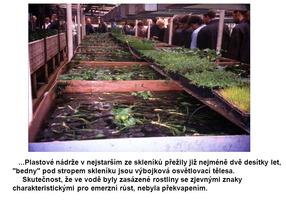 ...Plastové nádrže v nejstarším ze skleníků přežily již nejméně dvě desítky let, bedny pod stropem skleníku jsou výbojková osvětlovací tělesa.