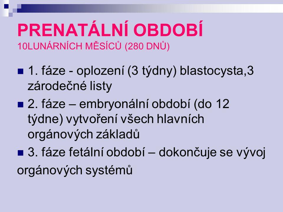 PRENATÁLNÍ OBDOBÍ 10LUNÁRNÍCH MĚSÍCŮ (280 DNŮ) 1. fáze - oplození (3 týdny) blastocysta,3 zárodečné listy 2. fáze – embryonální období (do 12 týdne) v