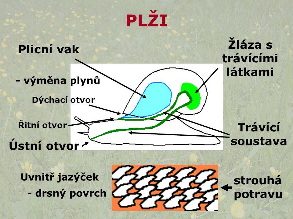 Plicní vak - výměna plynů Dýchací otvor Ústní otvor Trávící soustava Žláza s trávícími látkami Řitní otvor Uvnitř jazýček - drsný povrch strouhá potravu