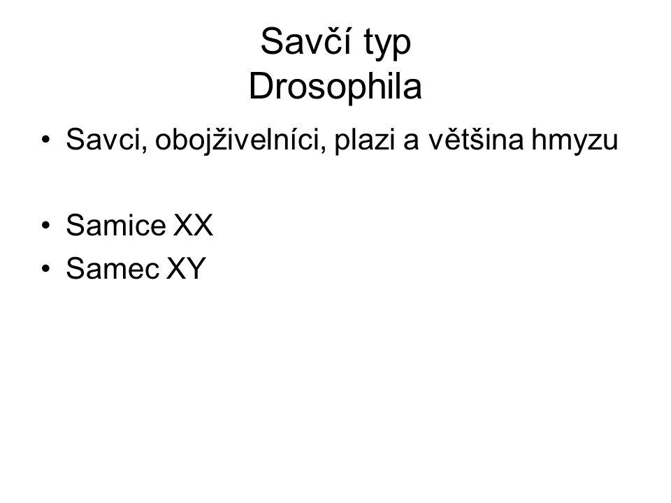 Savčí typ Drosophila Savci, obojživelníci, plazi a většina hmyzu Samice XX Samec XY