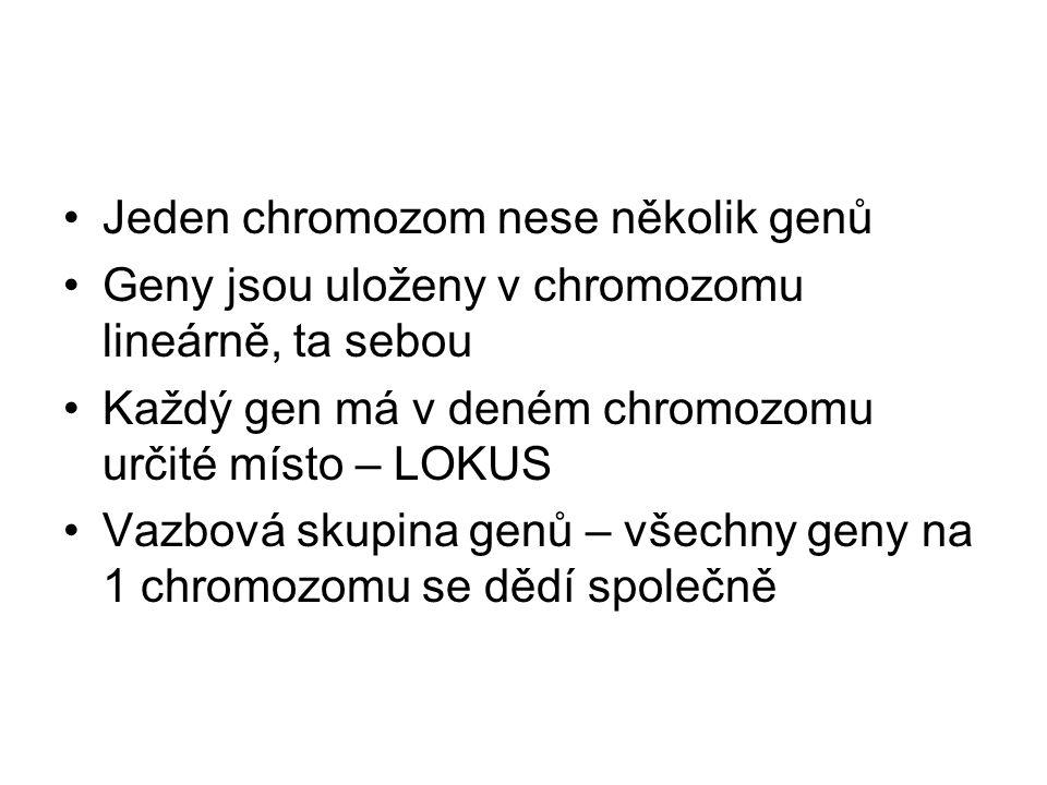 Jeden chromozom nese několik genů Geny jsou uloženy v chromozomu lineárně, ta sebou Každý gen má v deném chromozomu určité místo – LOKUS Vazbová skupi