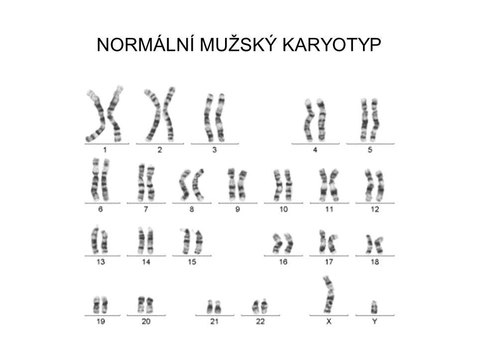Vznik pohlavních buněk (gametogeneze) Při meióze (redukčním dělení) se homologní chromozómy rozcházejí = SEGREGACE CHROMOZÓMŮ Z diplodní buňky vznikají 4 haploidní buňky (gamety)