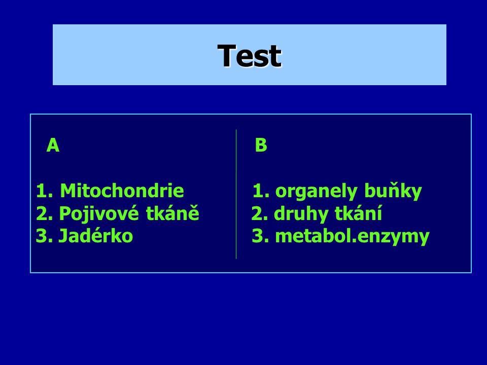 Test A B 1.Mitochondrie 1.organely buňky 2. Pojivové tkáně 2.