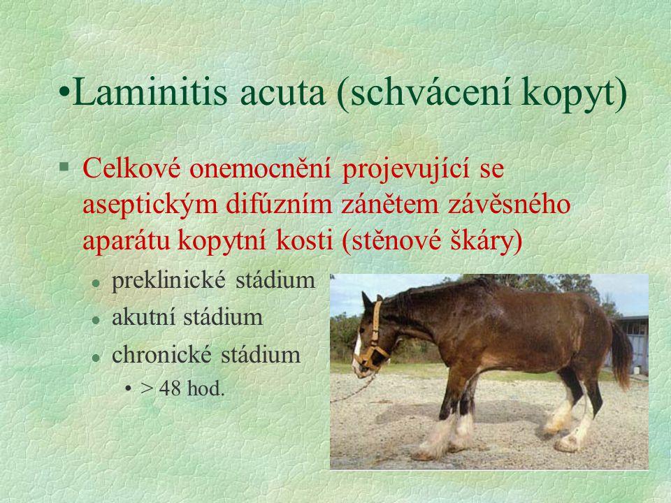 Laminitis acuta (schvácení kopyt) §Celkové onemocnění projevující se aseptickým difúzním zánětem závěsného aparátu kopytní kosti (stěnové škáry) l pre