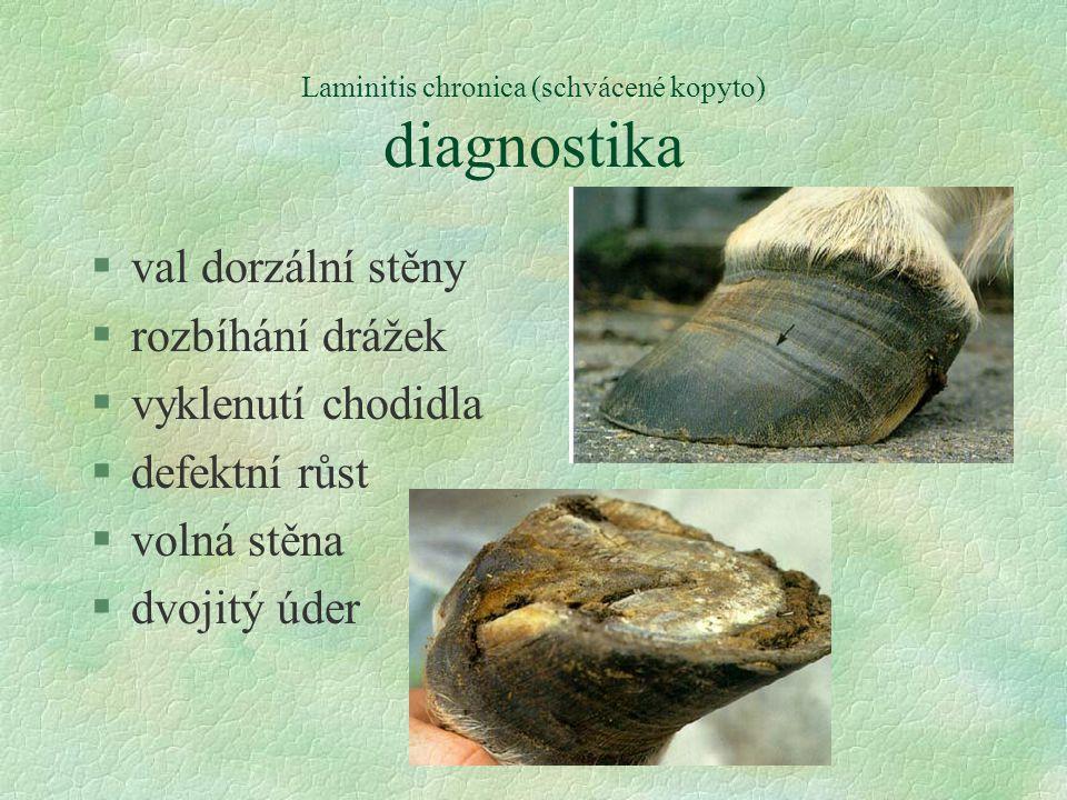 Laminitis chronica (schvácené kopyto) diagnostika §val dorzální stěny §rozbíhání drážek §vyklenutí chodidla §defektní růst §volná stěna §dvojitý úder