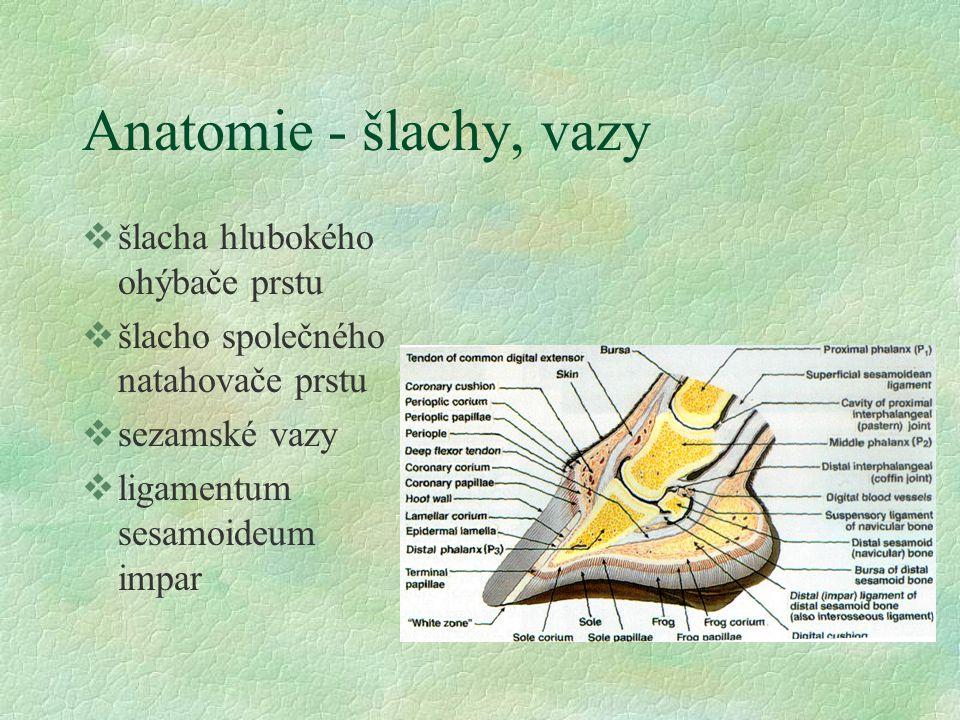 Laminitis acuta (schvácení kopyt) etiologie §dieta l glycidy l bílkoviny l hyperlipémie (pony) l tekutiny §přetížení §endotoxémie, sepse §kortikoidy, NSAID