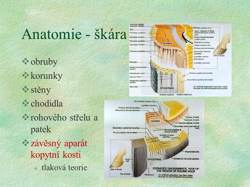 Anatomie - rohové pouzdro vobruba vkorunka vstěna, rozpěrky vchodidlo vstřel vpatky v glazura v ochranná vrstva v spojovací vrstva