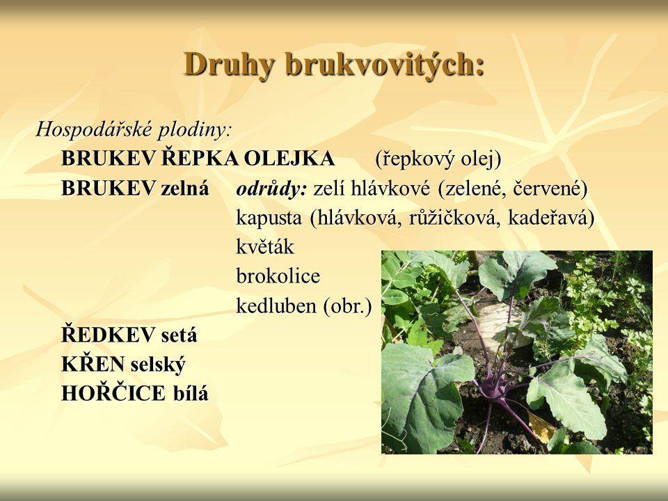 Druhy brukvovitých: Hospodářské plodiny: BRUKEV ŘEPKA OLEJKA (řepkový olej) BRUKEV zelnáodrůdy: zelí hlávkové (zelené, červené) kapusta (hlávková, růž