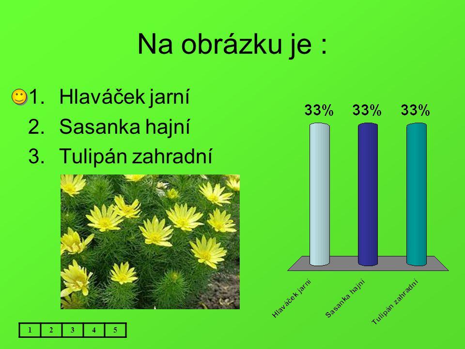 Na obrázku je : 12345 1.Hlaváček jarní 2.Sasanka hajní 3.Tulipán zahradní