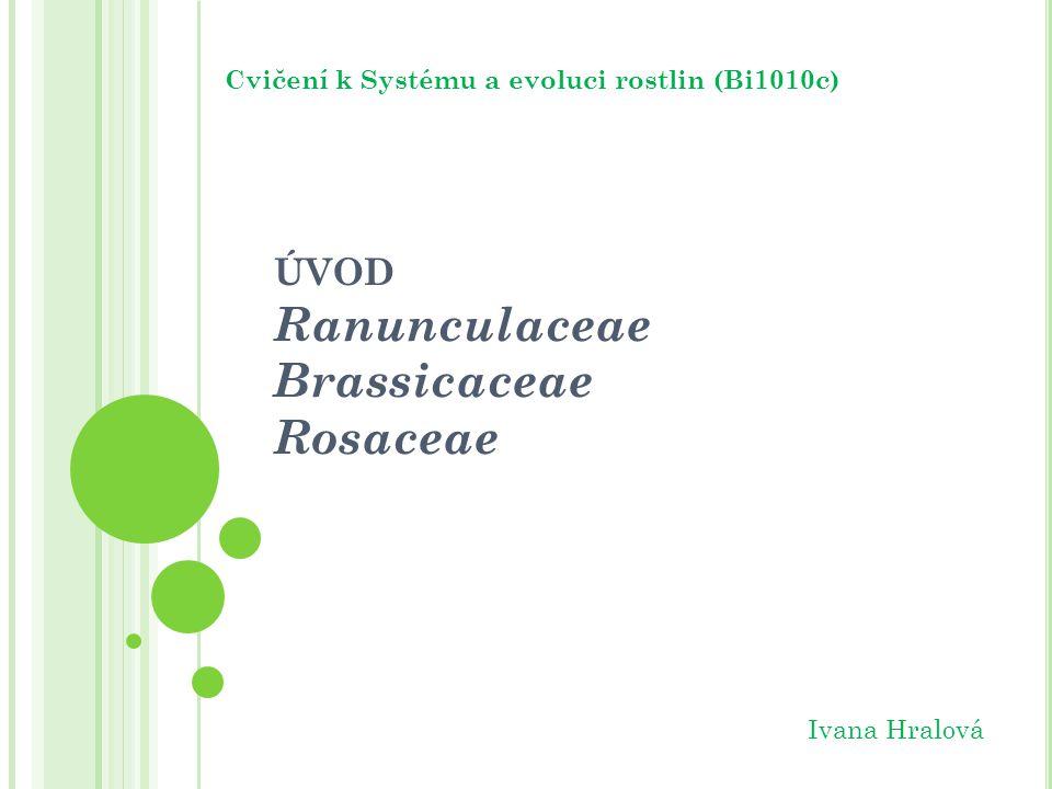 ÚVOD Ranunculaceae Brassicaceae Rosaceae Cvičení k Systému a evoluci rostlin (Bi1010c) Ivana Hralová