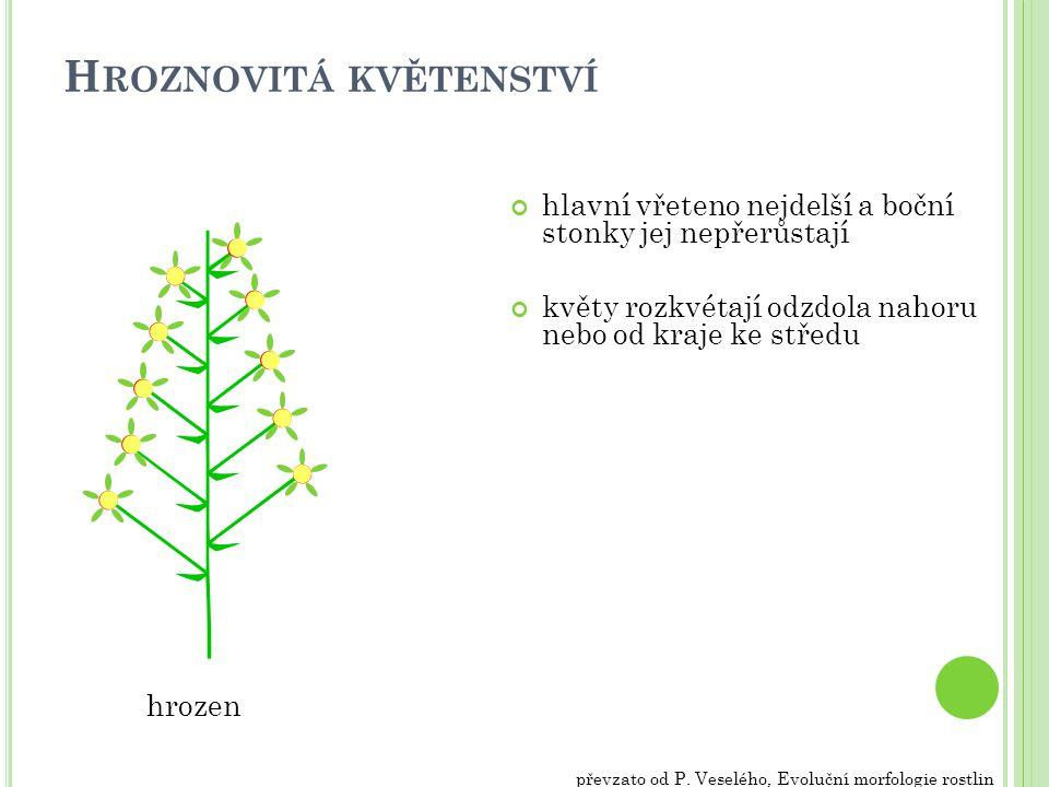 H ROZNOVITÁ KVĚTENSTVÍ hlavní vřeteno nejdelší a boční stonky jej nepřerůstají květy rozkvétají odzdola nahoru nebo od kraje ke středu hrozen převzato