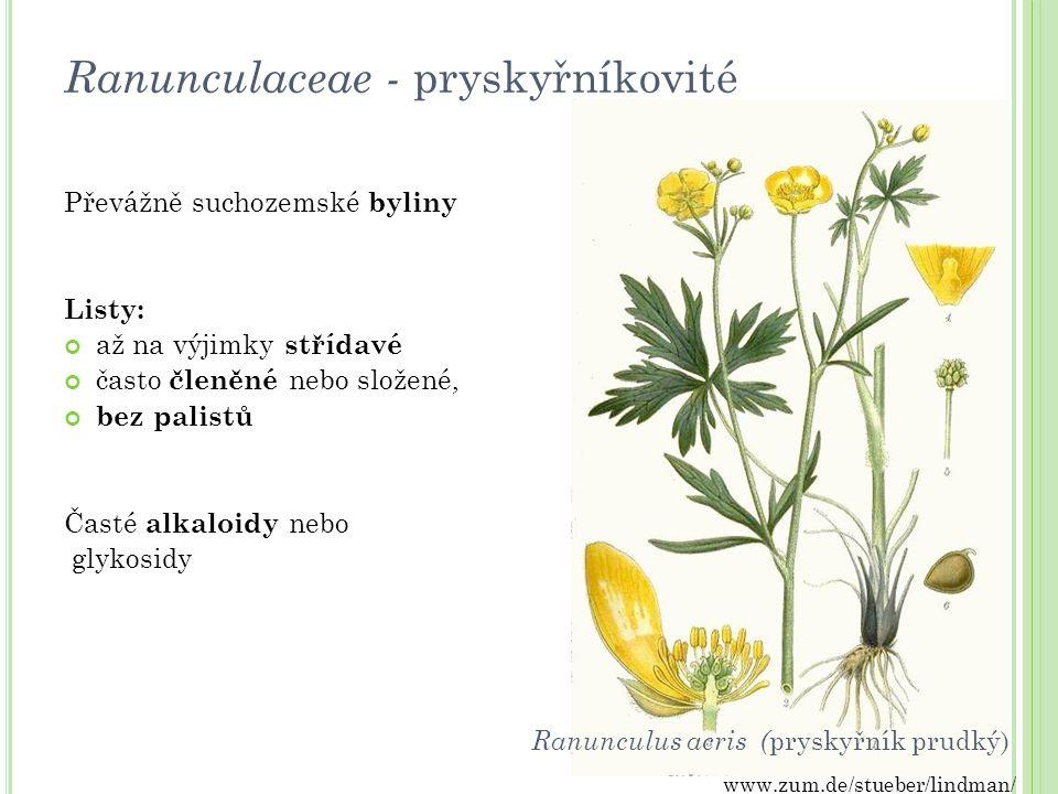 Ranunculaceae - pryskyřníkovité Převážně suchozemské byliny Listy: až na výjimky střídavé často členěné nebo složené, bez palistů Časté alkaloidy nebo