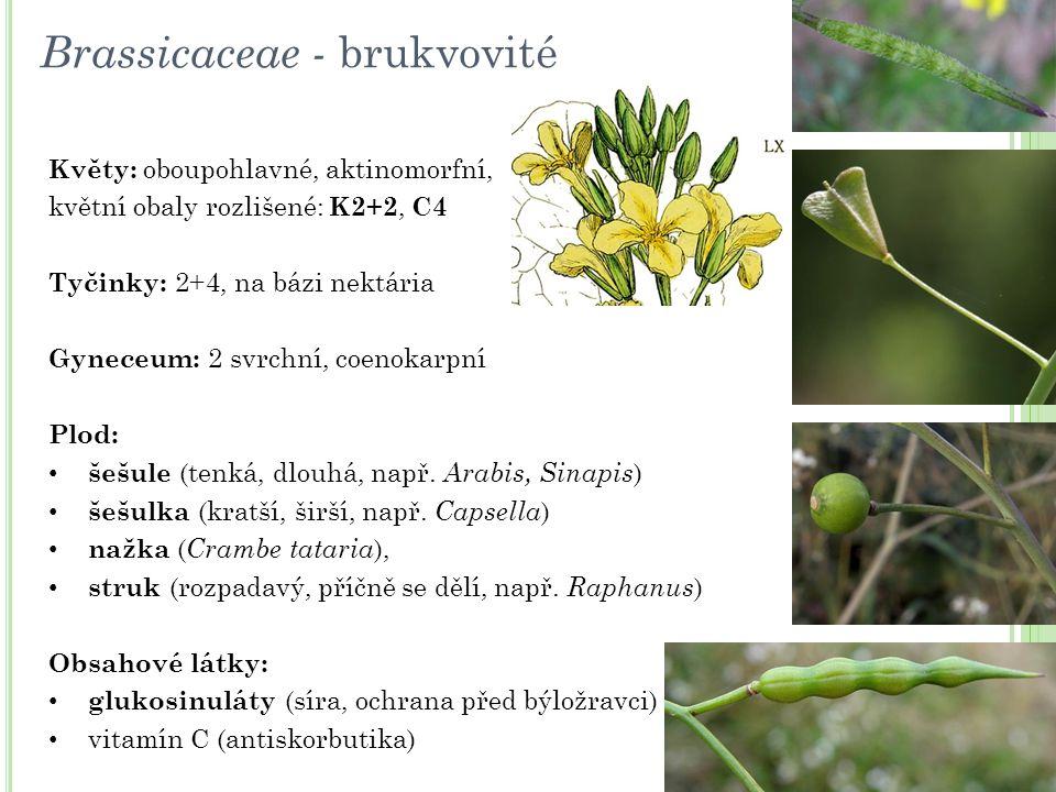 Květy: oboupohlavné, aktinomorfní, květní obaly rozlišené: K2+2, C4 Tyčinky: 2+4, na bázi nektária Gyneceum: 2 svrchní, coenokarpní Plod: šešule (tenk