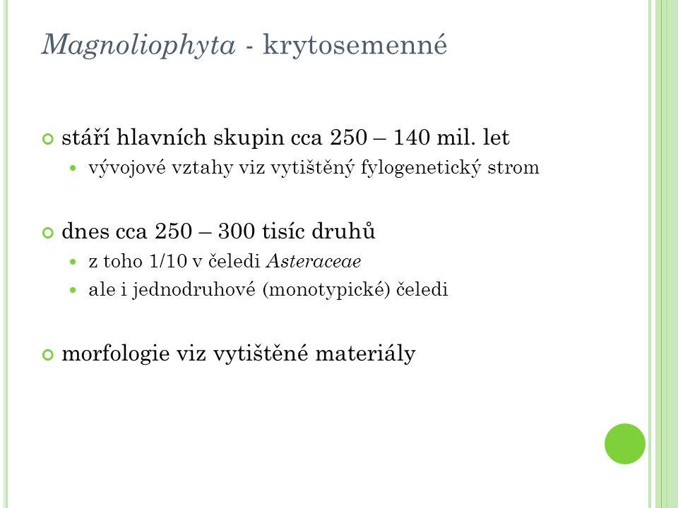 Magnoliophyta - krytosemenné stáří hlavních skupin cca 250 – 140 mil. let vývojové vztahy viz vytištěný fylogenetický strom dnes cca 250 – 300 tisíc d
