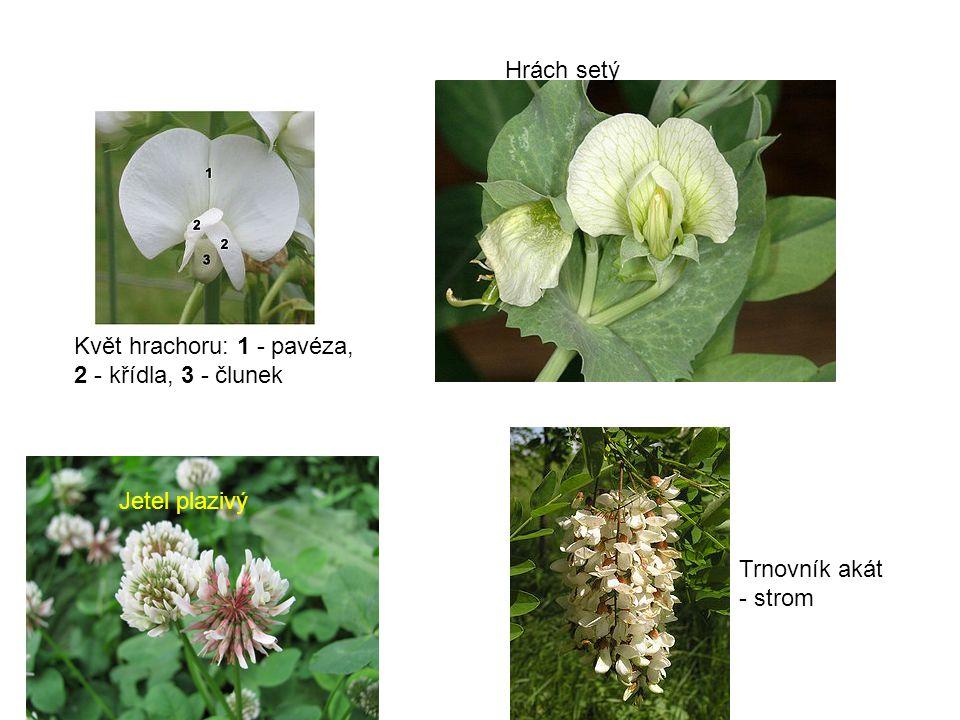 Květ hrachoru: 1 - pavéza, 2 - křídla, 3 - člunek Hrách setý Jetel plazivý Trnovník akát - strom