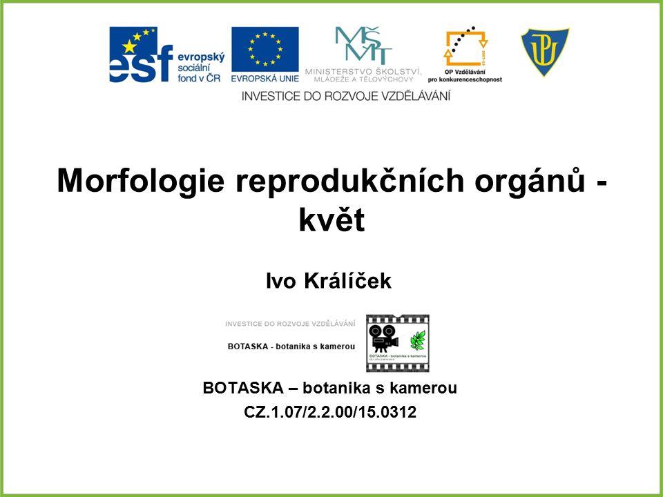 Morfologie reprodukčních orgánů - květ BOTASKA – botanika s kamerou CZ.1.07/2.2.00/15.0312 Ivo Králíček