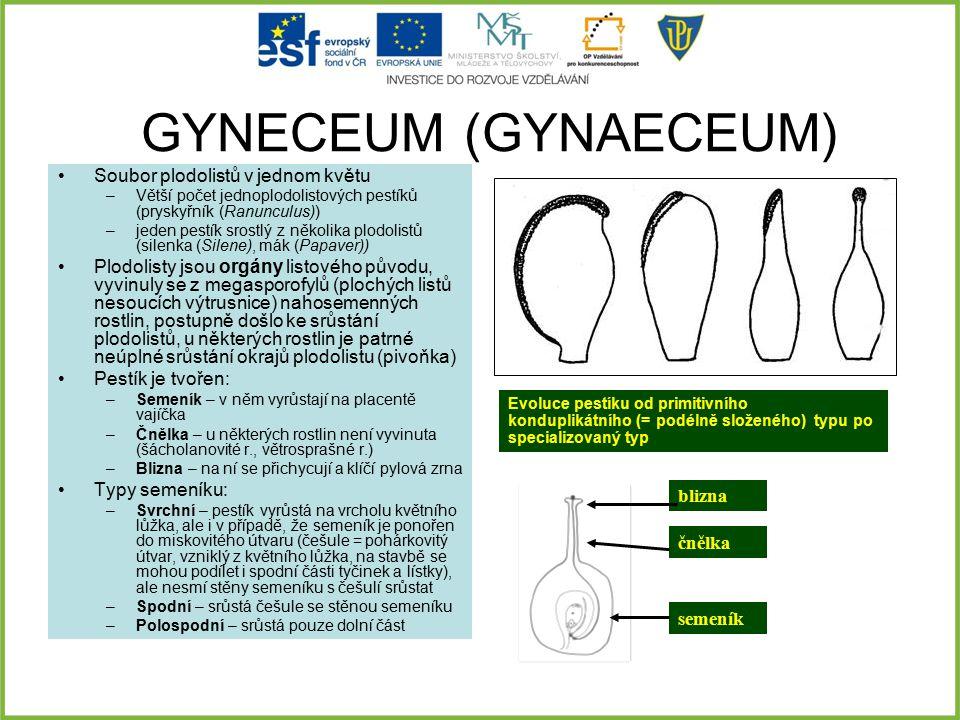 GYNECEUM (GYNAECEUM) Soubor plodolistů v jednom květu –Větší počet jednoplodolistových pestíků (pryskyřník (Ranunculus)) –jeden pestík srostlý z někol