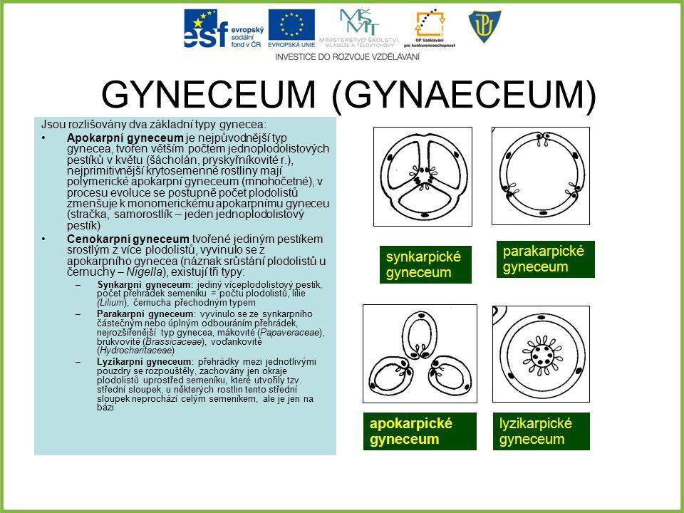 GYNECEUM (GYNAECEUM) Jsou rozlišovány dva základní typy gynecea: Apokarpní gyneceum je nejpůvodnější typ gynecea, tvořen větším počtem jednoplodolisto