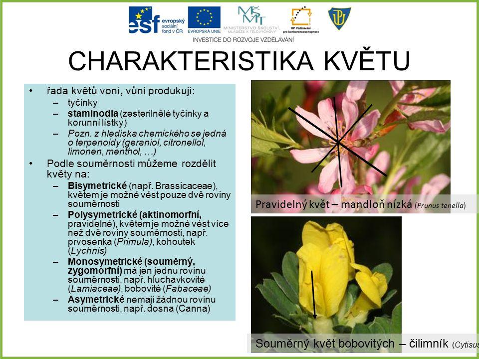 CHARAKTERISTIKA KVĚTU řada květů voní, vůni produkují: –tyčinky –staminodia (zesterilnělé tyčinky a korunní lístky) –Pozn. z hlediska chemického se je