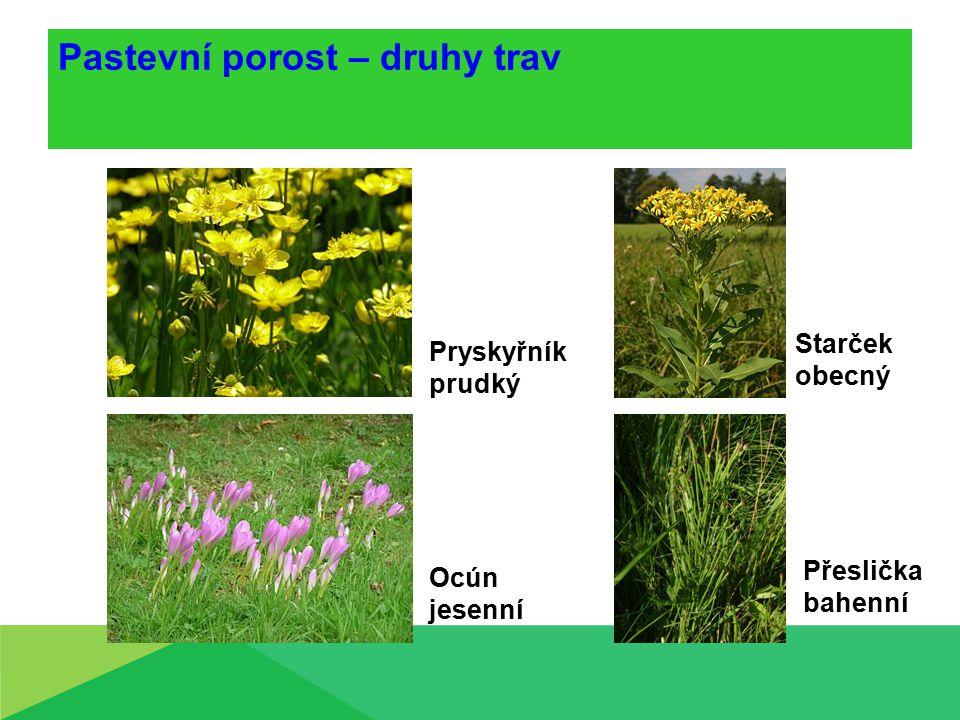 Pastevní porost – druhy trav Pryskyřník prudký Starček obecný Ocún jesenní Přeslička bahenní