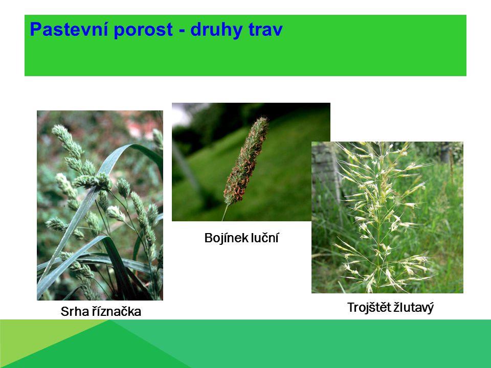 Pastevní porost - druhy trav Srha říznačka Bojínek luční Trojštět žlutavý