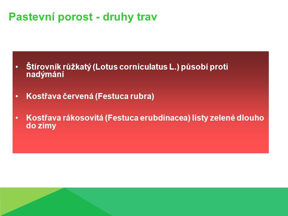 Pastevní porost - druhy trav Štírovník růžkatý (Lotus corniculatus L.) působí proti nadýmání Kostřava červená (Festuca rubra) Kostřava rákosovitá (Festuca erubdinacea) listy zelené dlouho do zimy