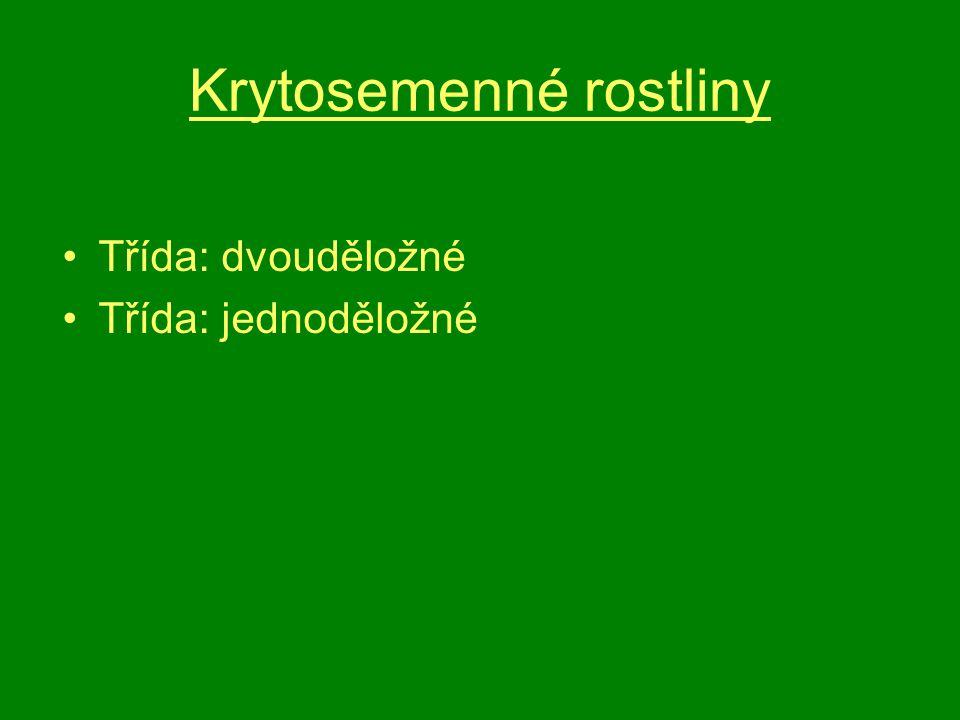 Třída: dvouděložné rostliny Dřeviny i byliny Zárodky klíčí 2 dělohami Kořínek embrya se vyvíjí v hlavní kořen, který se rozvětvuje v kořeny postranní Kruhovité uspořádání cévních svazků Přítomné kambium- druhotné tloustnutí