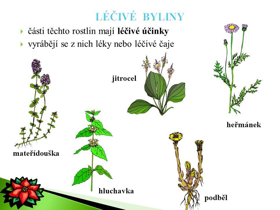  části těchto rostlin mají léčivé účinky  vyrábějí se z nich léky nebo léčivé čaje jitrocel mateřídouška heřmánek hluchavka podběl