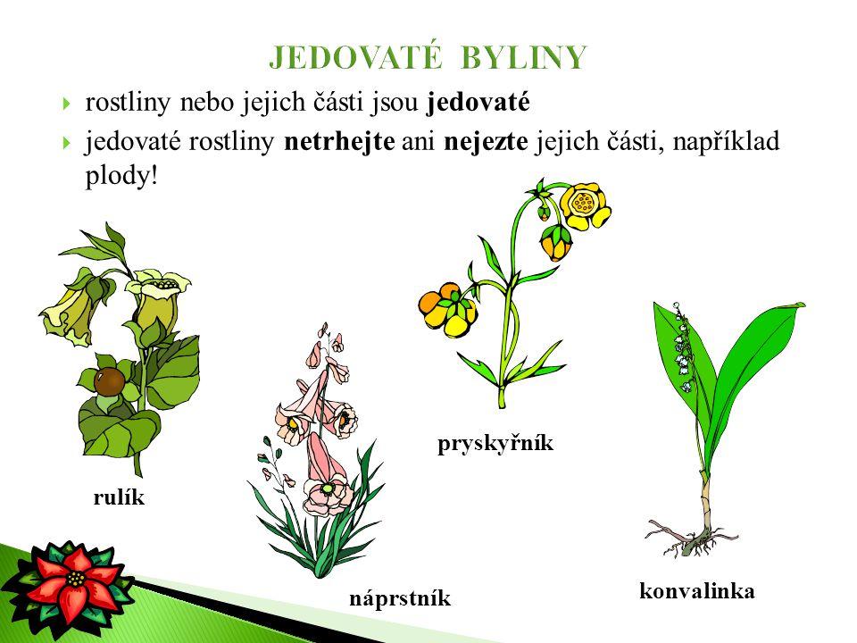  rostliny nebo jejich části jsou jedovaté  jedovaté rostliny netrhejte ani nejezte jejich části, například plody! rulík náprstník pryskyřník konvali