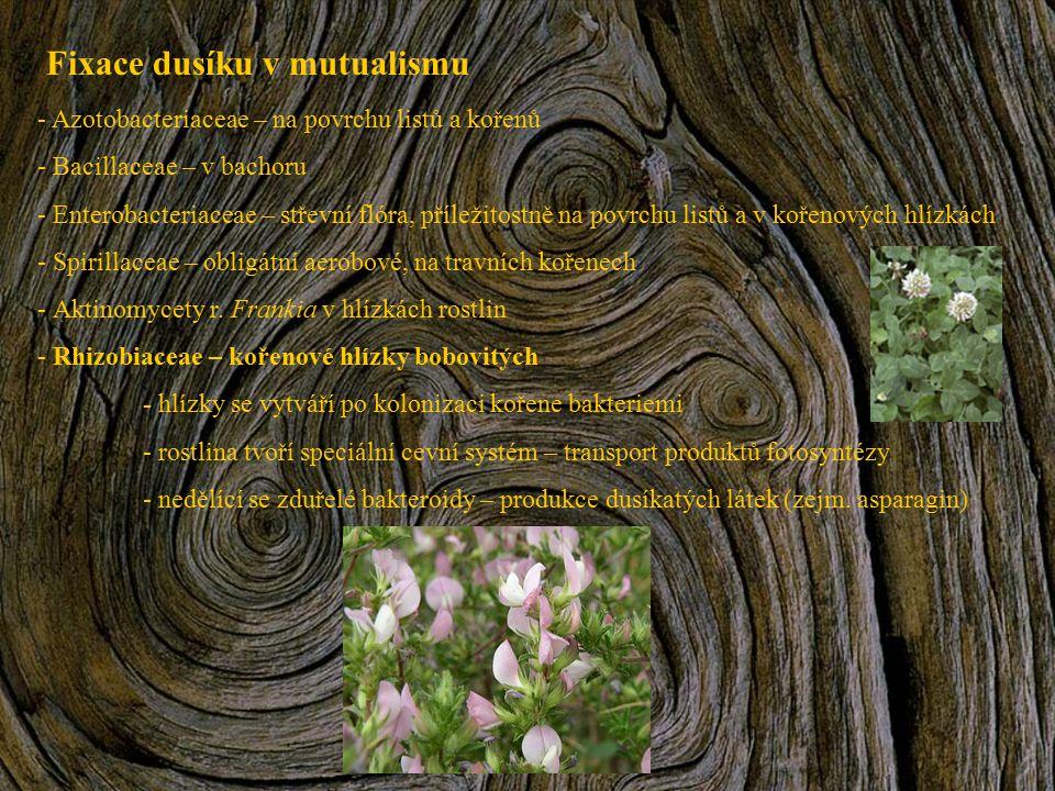 Fixace dusíku v mutualismu - Azotobacteriaceae – na povrchu listů a kořenů - Bacillaceae – v bachoru - Enterobacteriaceae – střevní flóra, příležitost