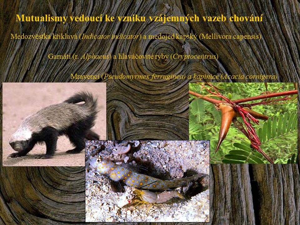 Mutualismy vedoucí ke vzniku vzájemných vazeb chování Medozvěstka křiklavá (Indicator indicator) a medojed kapský (Mellivora capensis) Garnáti (r. Alp