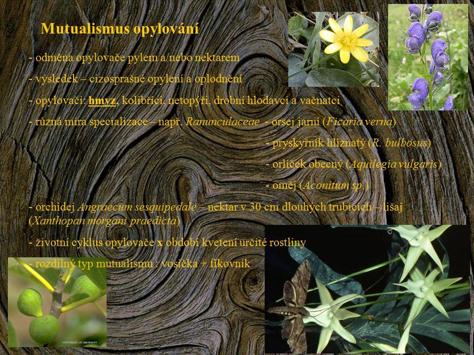 Mutualismus opylování - odměna opylovače pylem a/nebo nektarem - výsledek – cizosprašné opylení a oplodnění - opylovači: hmyz, kolibříci, netopýři, dr