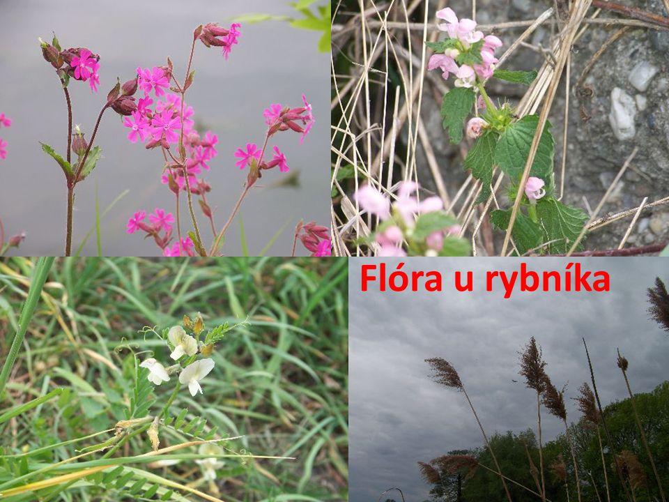 Flóra u rybníka