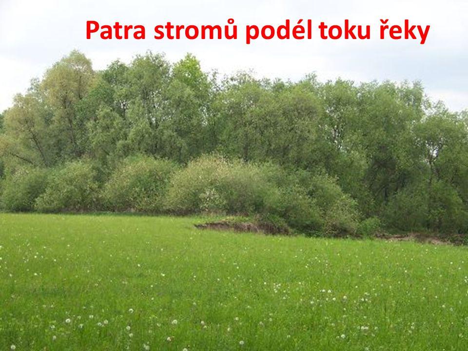 Patra stromů podél toku řeky