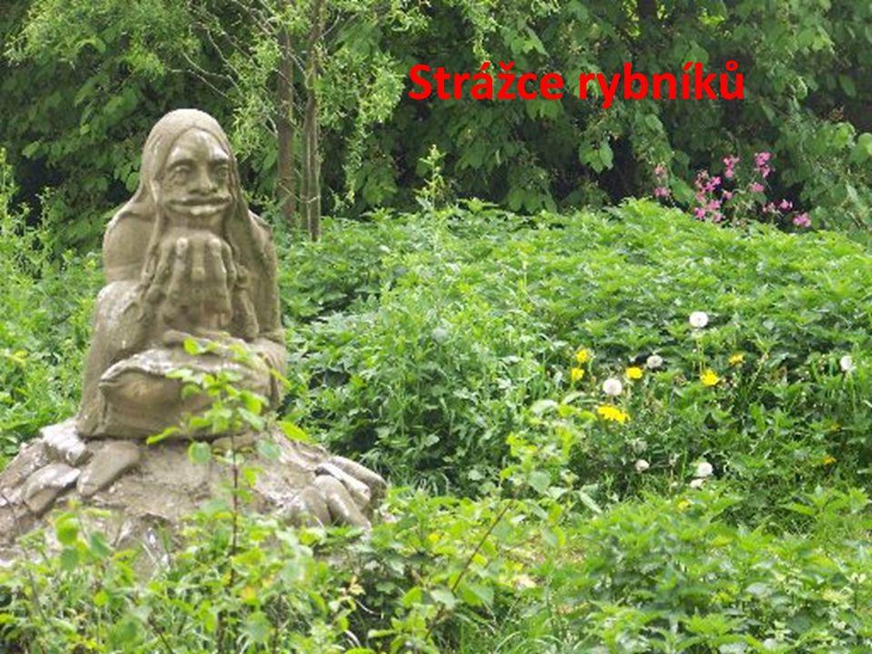 Pryskyřník lítý – první obyvatel dna rybníka