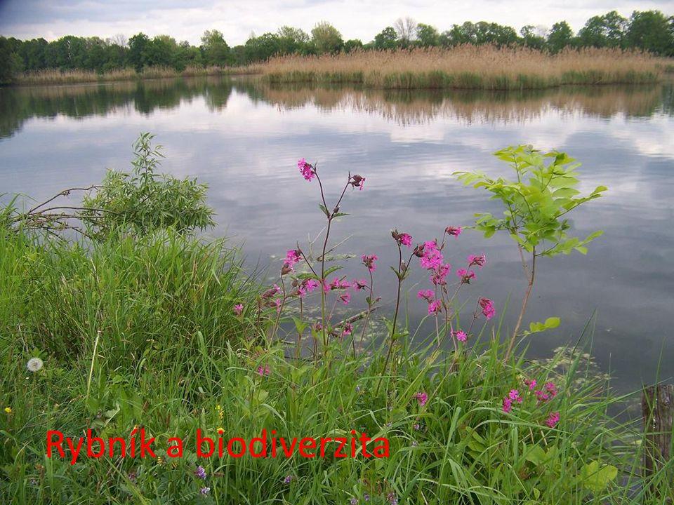 Rybník a biodiverzita