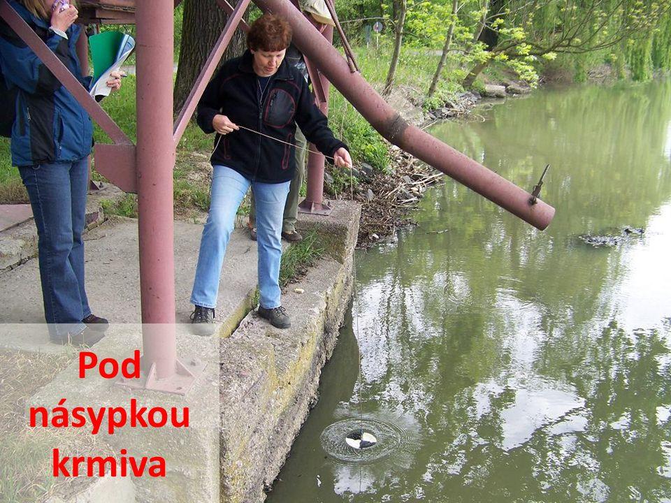 Kontrola čistoty vody
