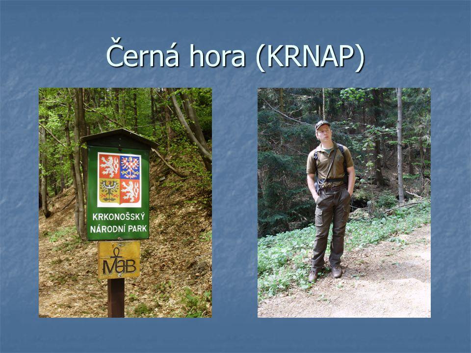 Černá hora (KRNAP)
