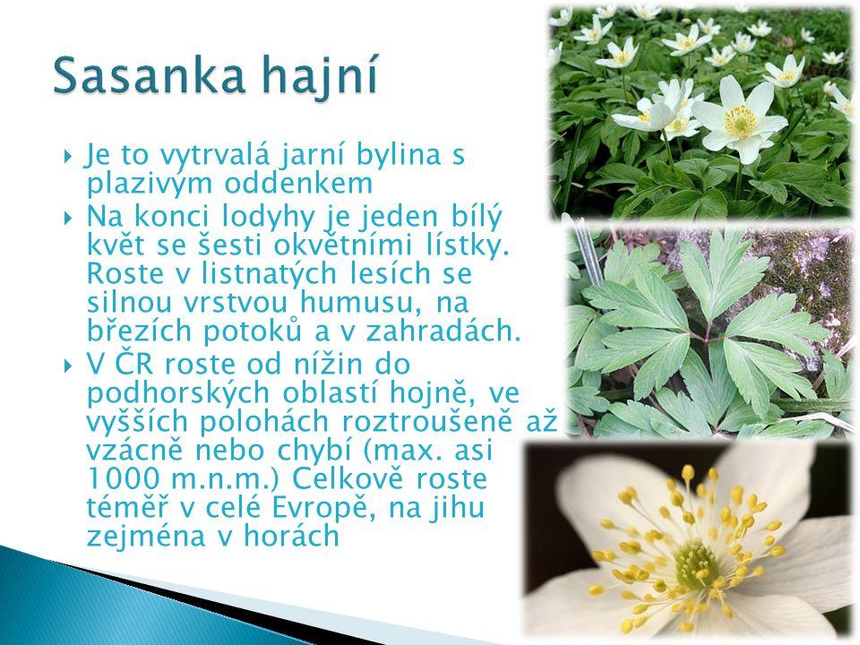  Je to vytrvalá jarní bylina s plazivým oddenkem  Na konci lodyhy je jeden bílý květ se šesti okvětními lístky. Roste v listnatých lesích se silnou