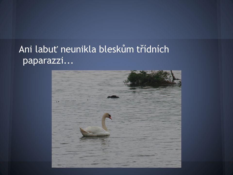 Ani labuť neunikla bleskům třídních paparazzi...