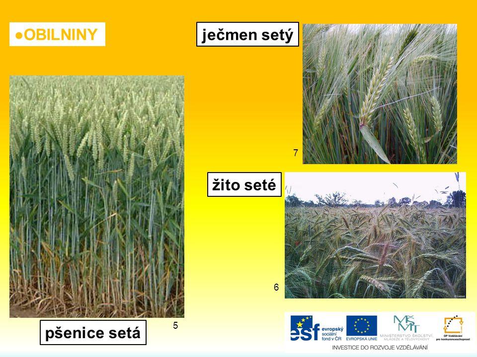 ●OBILNINY žito seté pšenice setá ječmen setý 6 7 5