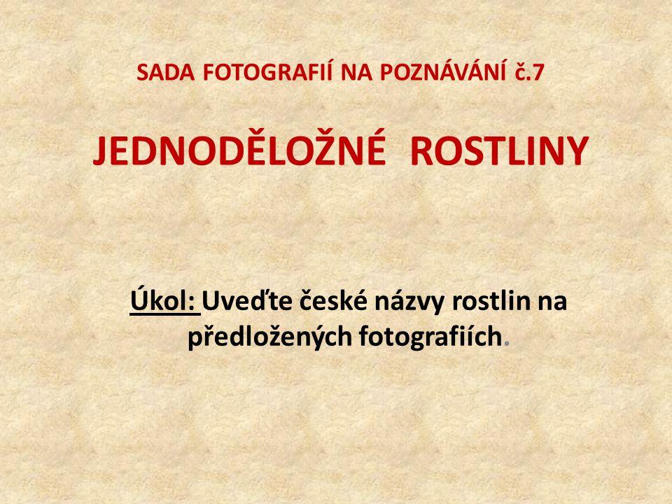 SADA FOTOGRAFIÍ NA POZNÁVÁNÍ č.7 JEDNODĚLOŽNÉ ROSTLINY Úkol: Uveďte české názvy rostlin na předložených fotografiích.