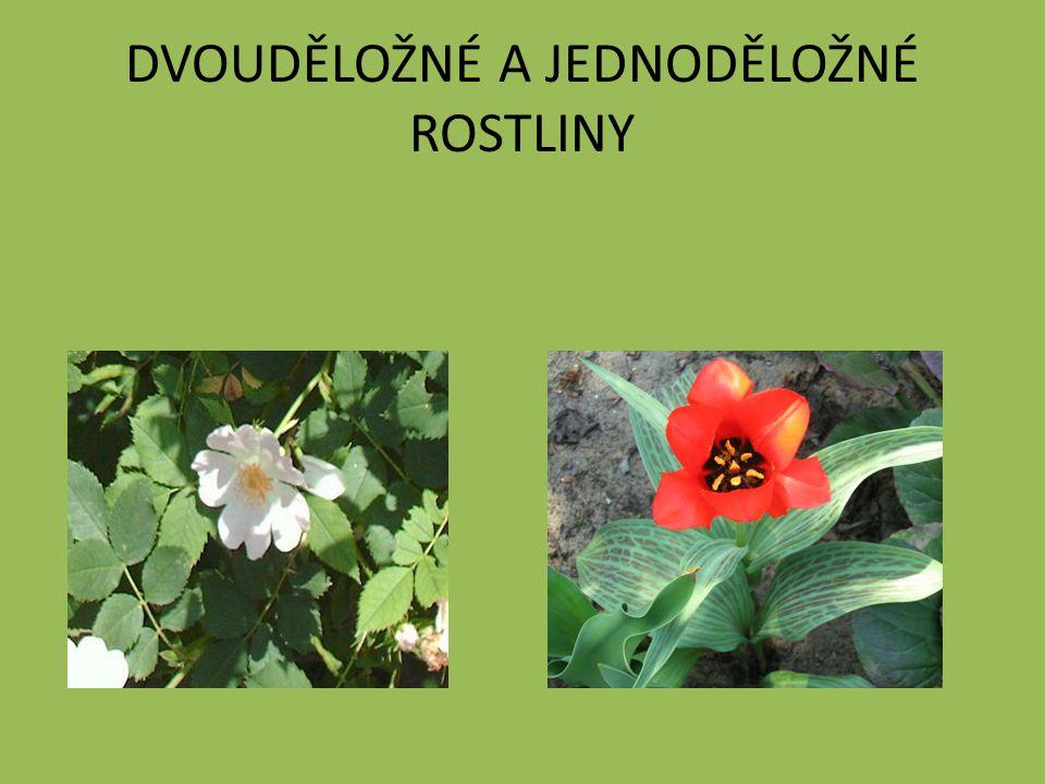 Opakování Dvouděložné Růže šípková