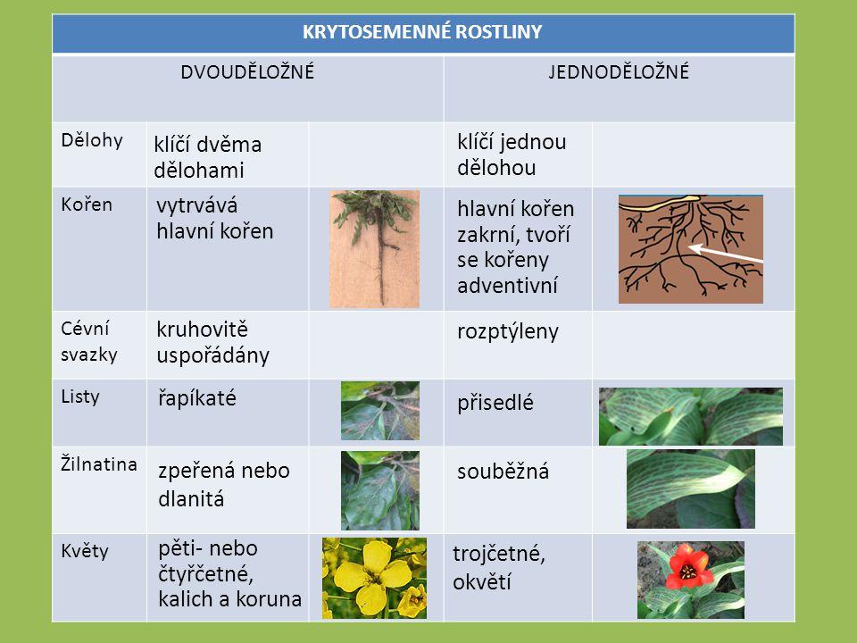 Opakování Na jaké dvě skupiny dělíme krytosemenné rostliny.