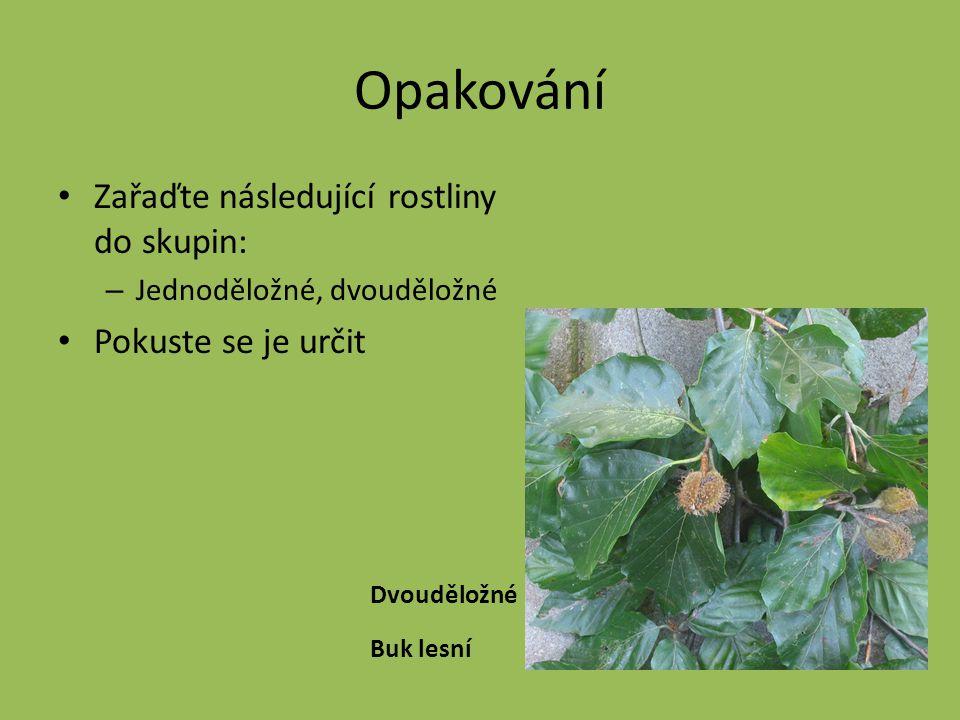 Opakování Zařaďte následující rostliny do skupin: – Jednoděložné, dvouděložné Pokuste se je určit Dvouděložné Buk lesní