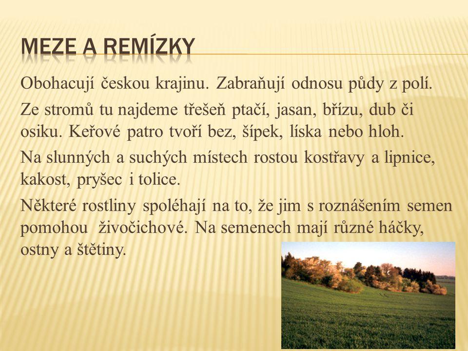 Obohacují českou krajinu. Zabraňují odnosu půdy z polí. Ze stromů tu najdeme třešeň ptačí, jasan, břízu, dub či osiku. Keřové patro tvoří bez, šípek,