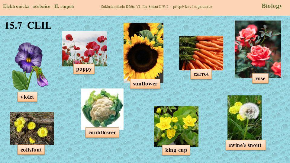15.7 CLIL Elektronická učebnice - II. stupeň Základní škola Děčín VI, Na Stráni 879/2 – příspěvková organizace Biology poppy sunflower rose violet cau